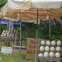 Chợ trứng đà điểu đợi khách du lịch