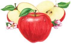 Dùng táo để giảm mập thế nào? - 1