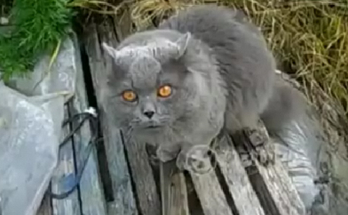 Video: Chú mèo biết nói chuyện - 1