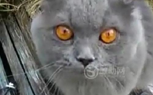 Video: Chú mèo biết nói chuyện - 2