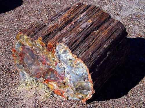 Hóa thạch gỗ khoảng 400 triệu năm - 1