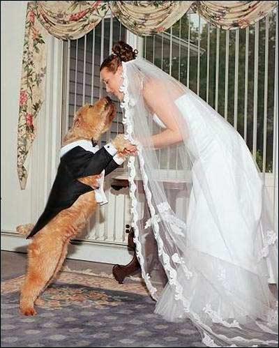 Những phong tục đám cưới kỳ lạ - 2