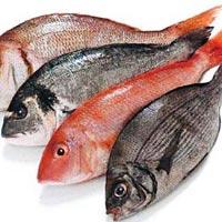 Modern eat live fish