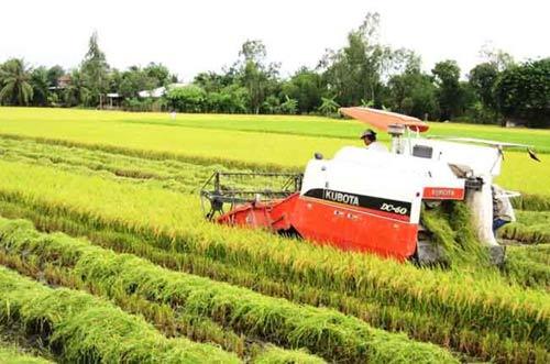Thị trường lúa gạo: Cấp thấp giảm giá, cấp cao tăng giá - 1