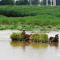 Lũ lụt hoành hành miền Trung, Nam Bộ nước lớn