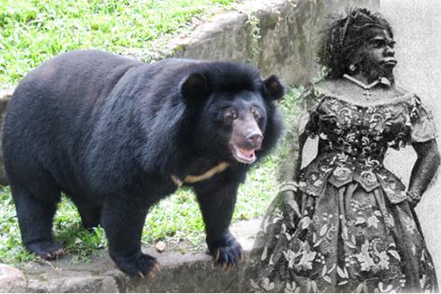 """Người đàn bà """"lai"""" gấu hay đười ươi? - 1"""