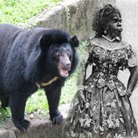 """Người đàn bà """"lai"""" gấu hay đười ươi?"""