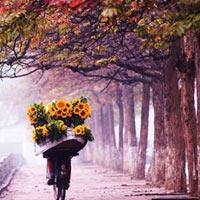 Lắng nghe và cảm nhận: Nhớ mùa thu Hà Nội