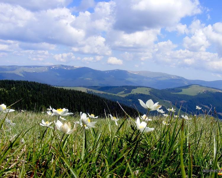 Hệ thống núi như thấp hơn khi mùa xuân mang đến những bông hoa tươi thắm đầy sức sống.