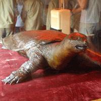 Tranh luận nảy lửa về rùa hồ Gươm