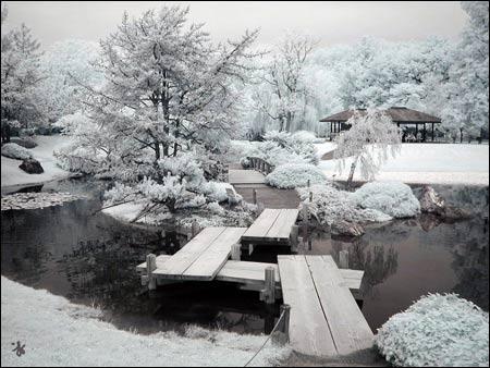 Vườn bách thảo Montreal - 6