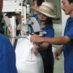 """Thị trường - Tiêu dùng - Khách hàng Trung Quốc """"dìm"""" giá gạo"""