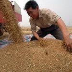 Thị trường - Tiêu dùng - TQ muốn thu gom lương thực vùng Nam Mỹ