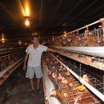 Thị trường - Tiêu dùng - Ngành chăn nuôi mất 5.000 tỷ đồng/tháng