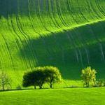 Du lịch - Choáng ngợp trước đồng cỏ xanh ngút ngàn ở Moravia