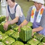 Thị trường - Tiêu dùng - Câu chuyện trái dưa hấu vuông ở Nhật