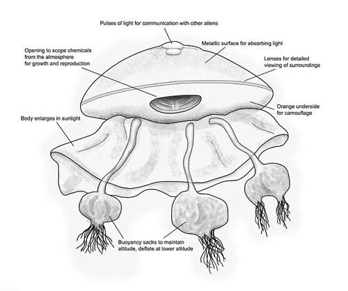 Người ngoài hành tinh trông giống sứa?, Phi thường - kỳ quặc, nguoi ngoai hanh tinh trong giong sua,sua,chuyen la,chuyen la co that,chuyen la the gioi,nguoi ngoai hanh tinh,UFO,ET,tin tuc,bi an lich su,bi an khoa hoc,bi an the gioi,tin tuc