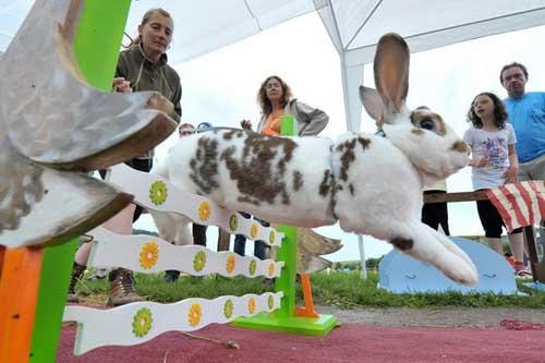Cuộc thi thỏ chạy vượt rào, Phi thường - kỳ quặc, cuoc thi tho chay vuot rao,cuoc thi,chuyen la,chuyen la the gioi,chuyen la co that,tin tuc