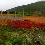 Tài chính - Bất động sản - Cty TQ gom đất: Tỉnh, huyện không biết?