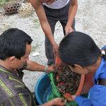 Ẩm thực - Chợ cua đá độc đáo trên sườn núi