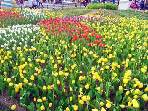 Công viên Hàn Quốc - Thiên đường của tình yêu - 8
