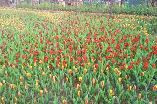 Công viên Hàn Quốc - Thiên đường của tình yêu - 12