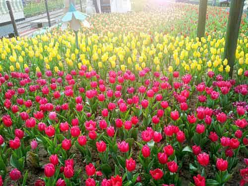 Công viên Hàn Quốc - Thiên đường của tình yêu - 11