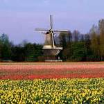 Du lịch - Dừng chân ở xứ sở loài hoa tulip