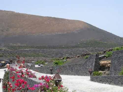 'Vườn nho sao băng' trên đảo núi lửa Lanzarote - 3