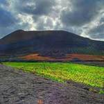 Du lịch - 'Vườn nho sao băng' trên đảo núi lửa Lanzarote
