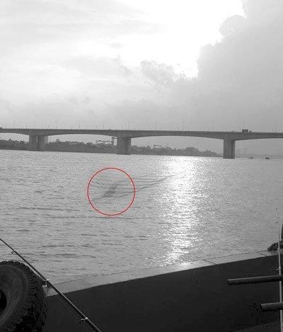 Chụp được ảnh thủy quái trên sông Hồng? - 1