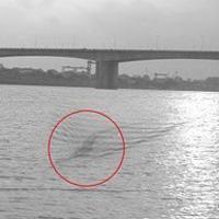 Chụp được ảnh thủy quái trên sông Hồng?
