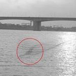 Tin tức trong ngày - Chụp được ảnh thủy quái trên sông Hồng?