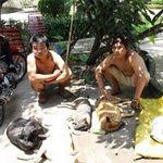 An ninh Xã hội - Lật tẩy chiêu trộm chó khiến vùng quê xôn xao