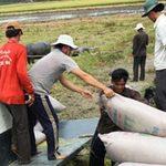 Thị trường - Tiêu dùng - Mua tạm trữ gạo: Nên học theo Thái Lan