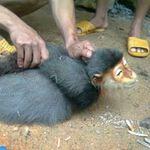 Tin tức trong ngày - Phẫn nộ: Giết khỉ dã man rồi chụp ảnh
