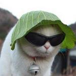 Cười 24H - Khi những chú Mèo đụng nước!