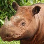 Tin tức trong ngày - Kiểm soát động vật hoang dã: VN nhận điểm đỏ