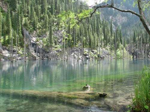 Kaindy - hồ nước kỳ lạ nhất thế giới - 6