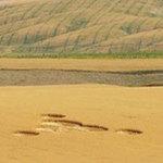 Phi thường - kỳ quặc - Vòng tròn bí ẩn xuất hiện trên cánh đồng