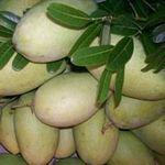 Sức khỏe đời sống - Nhận diện trái cây bị ngâm chất độc
