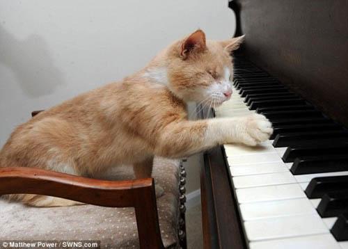 Chú mèo mù mê chơi piano - 1