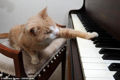 Chú mèo mù mê chơi piano - 4