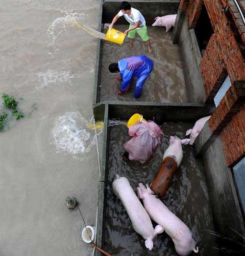 Chùm ảnh: Bão Haikui tàn phá Trung Quốc - 2