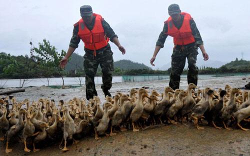 Chùm ảnh: Bão Haikui tàn phá Trung Quốc - 3