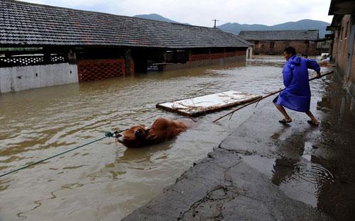 Chùm ảnh: Bão Haikui tàn phá Trung Quốc - 4