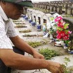 Tin tức trong ngày - Sống dư dả nhờ... nghĩa trang