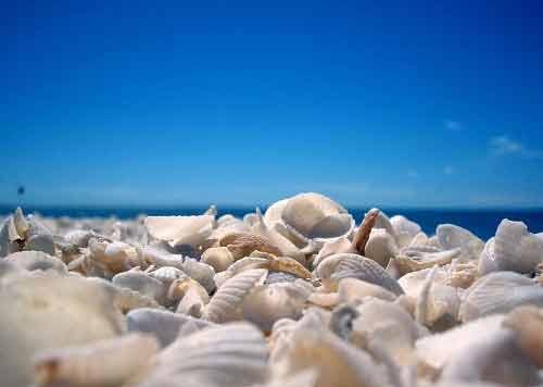 Những bãi biển vỏ sò tuyệt đẹp của thế giới - 1