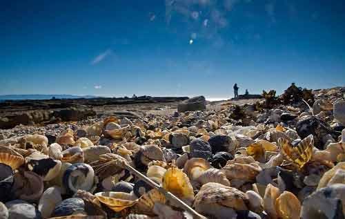 Những bãi biển vỏ sò tuyệt đẹp của thế giới - 2