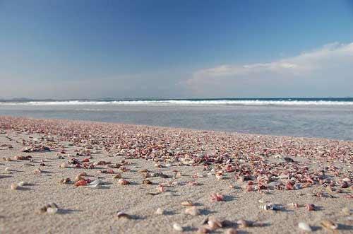 Những bãi biển vỏ sò tuyệt đẹp của thế giới - 4